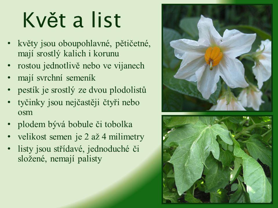Kv ě t a list květy jsou oboupohlavné, pětičetné, mají srostlý kalich i korunu rostou jednotlivě nebo ve vijanech mají svrchní semeník pestík je srost