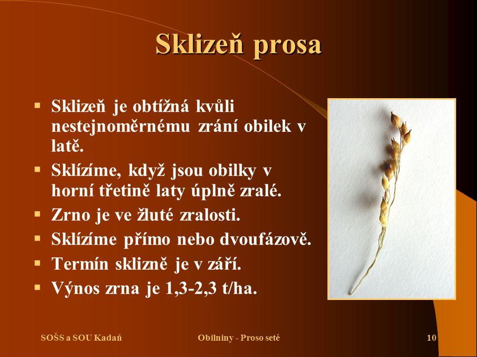 SOŠS a SOU KadaňObilniny - Proso seté10 Sklizeň prosa  Sklizeň je obtížná kvůli nestejnoměrnému zrání obilek v latě.  Sklízíme, když jsou obilky v h