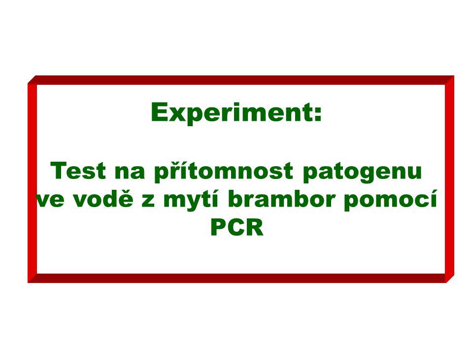 Experiment: Test na přítomnost patogenu ve vodě z mytí brambor pomocí PCR