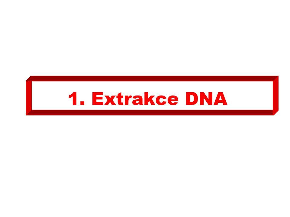 4.1.Do tří sterilních mikrozkumavek (E1, E2, E3), pipetujte 10μL roztoku PCR (A, C-, C +).