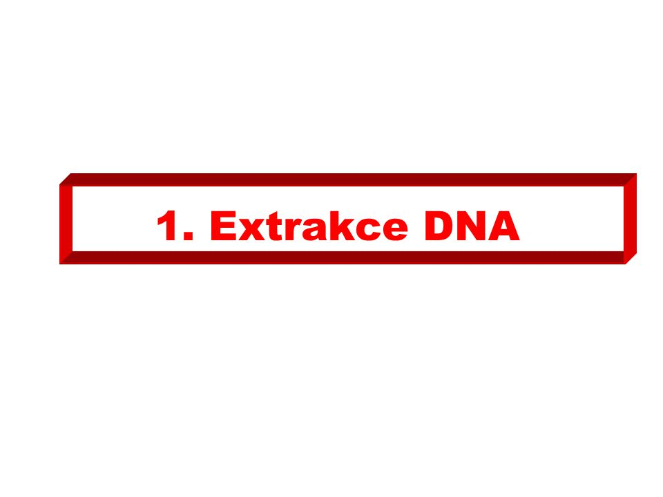 1. Extrakce DNA