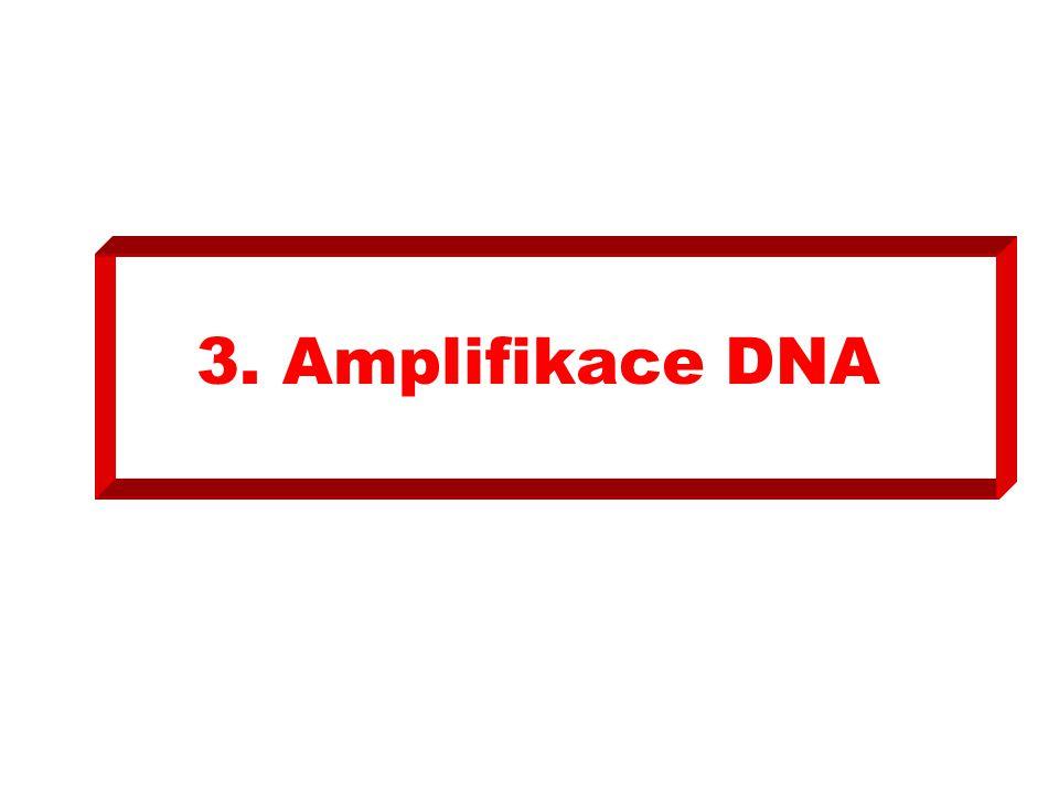 3.1.Do mikrozkumavky (A) pro PCR pipetujte 10µL roztoku DNA z mikrouzkumavky (P2).