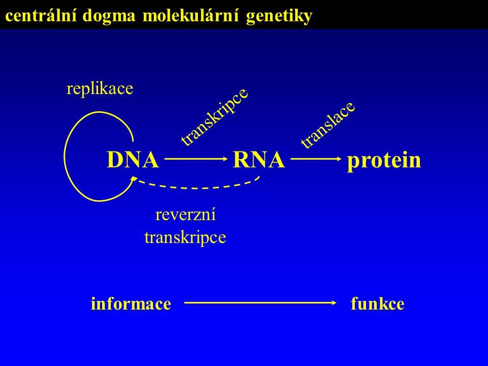 centrální dogma molekulární genetiky reverzní transkripce DNARNAprotein transkripce translace replikace informacefunkce