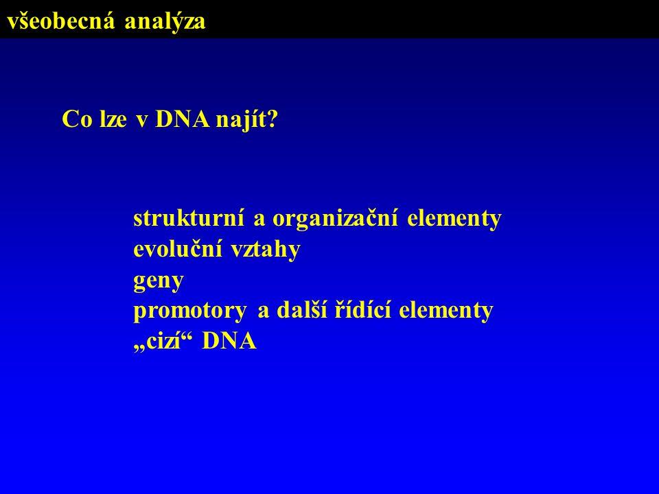 """Co lze v DNA najít? strukturní a organizační elementy evoluční vztahy geny promotory a další řídící elementy """"cizí"""" DNA všeobecná analýza"""