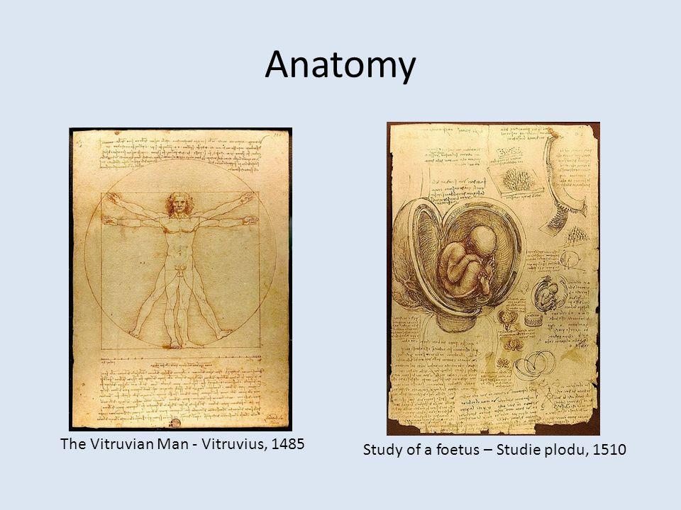 Anatomy The Vitruvian Man - Vitruvius, 1485 Study of a foetus – Studie plodu, 1510