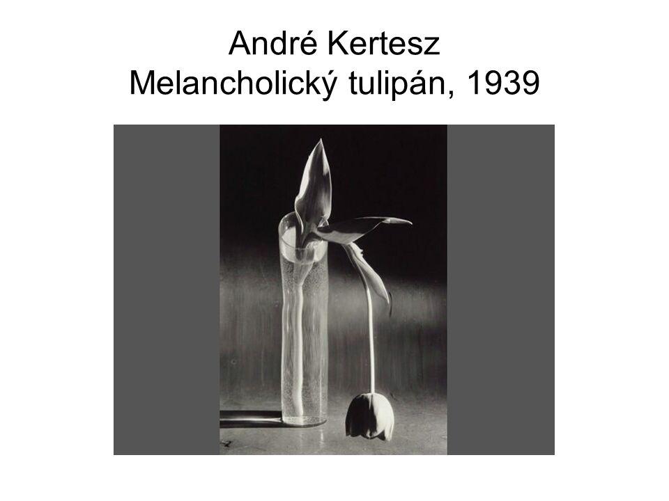 André Kertesz Melancholický tulipán, 1939