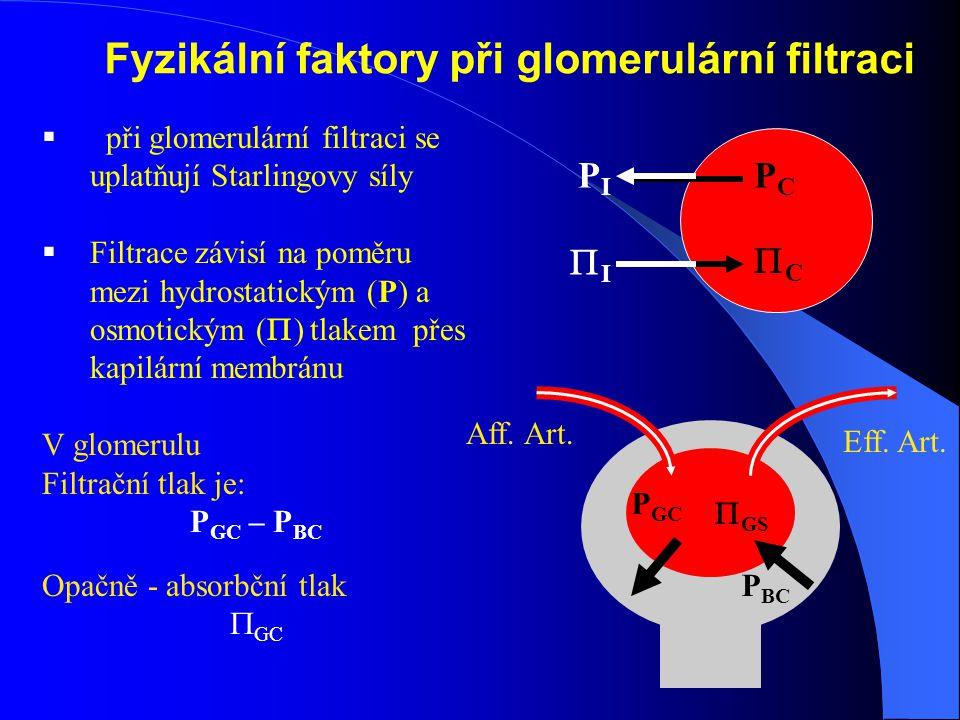 Fyzikální faktory při glomerulární filtraci  při glomerulární filtraci se uplatňují Starlingovy síly  Filtrace závisí na poměru mezi hydrostatickým (P) a osmotickým (  ) tlakem přes kapilární membránu V glomerulu Filtrační tlak je: P GC – P BC Opačně - absorbční tlak  GC P GC P BC  GS PCPC PIPI II CC Aff.