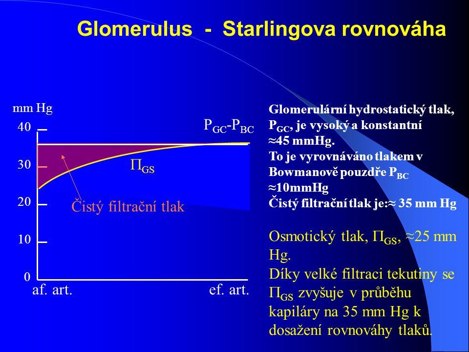 Glomerulární hydrostatický tlak, P GC, je vysoký a konstantní ≈45 mmHg.