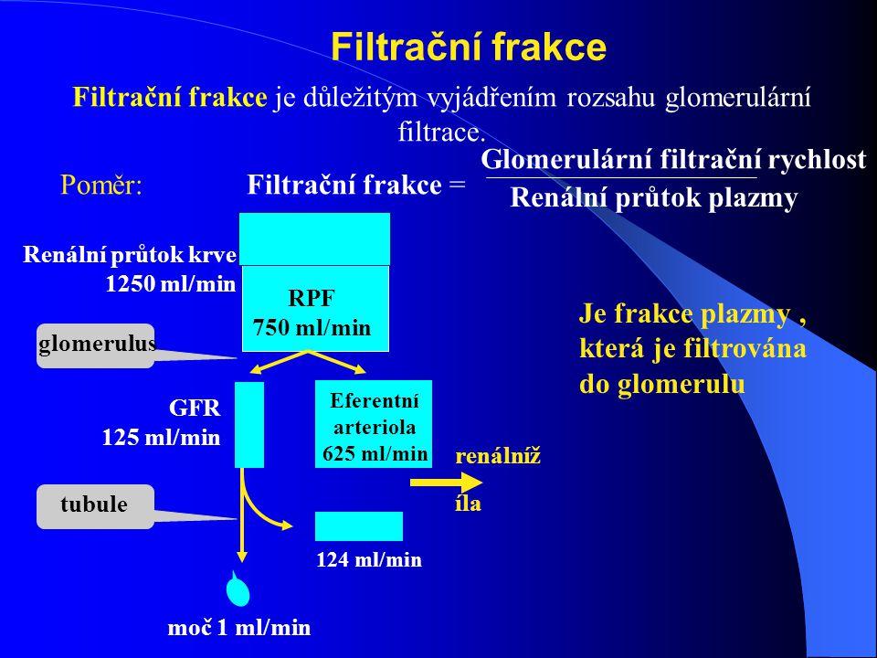 Filtrační frakce Filtrační frakce je důležitým vyjádřením rozsahu glomerulární filtrace.