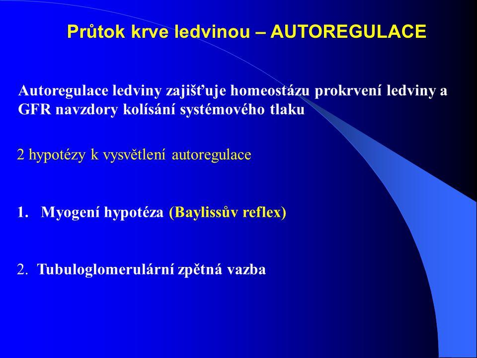 Průtok krve ledvinou – AUTOREGULACE 2 hypotézy k vysvětlení autoregulace 1.Myogení hypotéza (Baylissův reflex) 2.