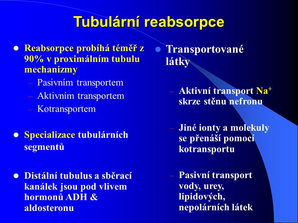 Tubulární reabsorpce Reabsorpce probíhá téměř z 90% v proximálním tubulu mechanizmy – Pasivním transportem – Aktivním transportem – Kotransportem Specializace tubulárních segmentů Distální tubulus a sběrací kanálek jsou pod vlivem hormonů ADH & aldosteronu Transportované látky – Aktivní transport Na + skrze stěnu nefronu – Jiné ionty a molekuly se přenáší pomocí kotransportu – Pasivní transport vody, urey, lipidových, nepolárních látek