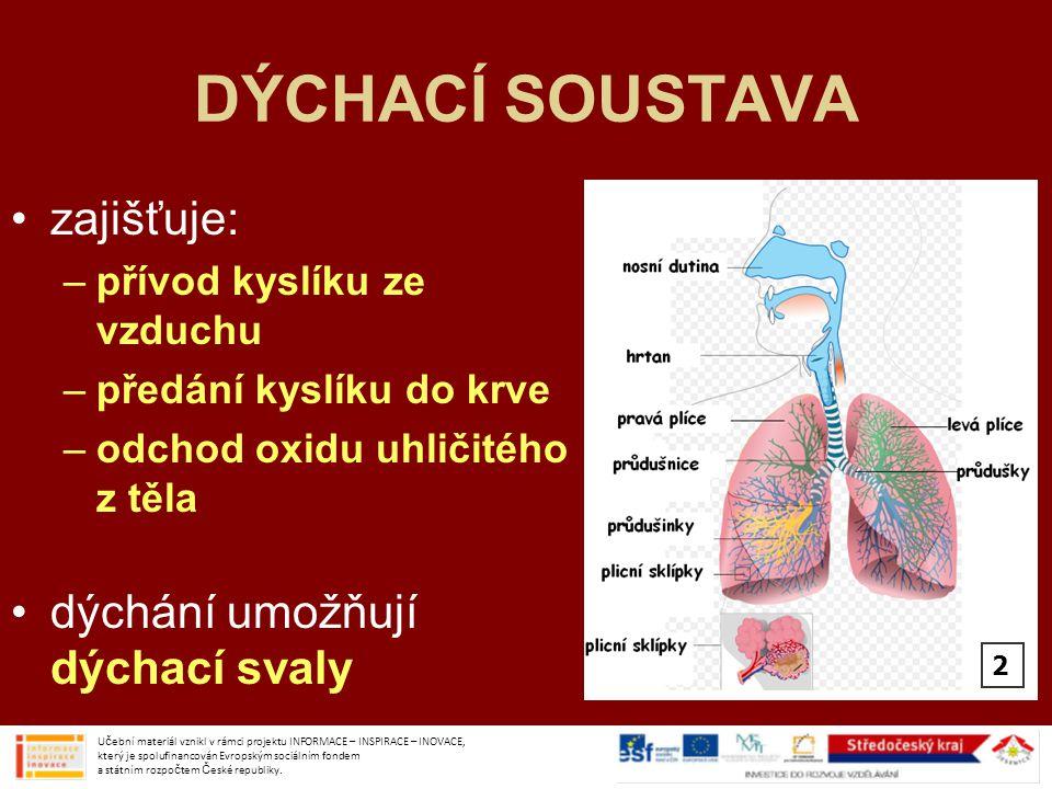 DÝCHACÍ SOUSTAVA zajišťuje: –přívod kyslíku ze vzduchu –předání kyslíku do krve –odchod oxidu uhličitého z těla dýchání umožňují dýchací svaly Učební
