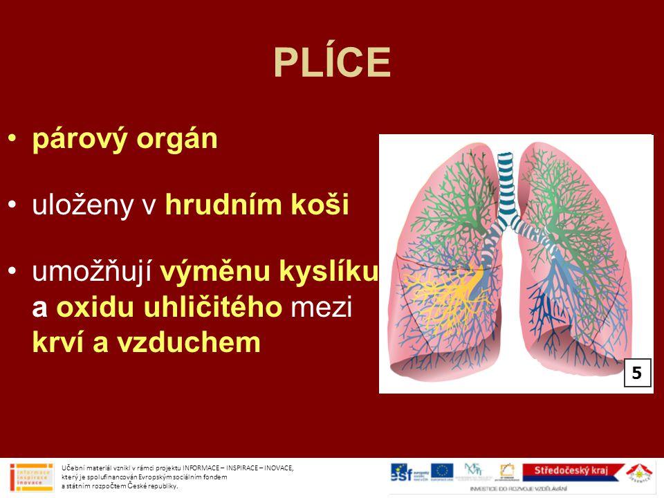 PLÍCE párový orgán uloženy v hrudním koši umožňují výměnu kyslíku a oxidu uhličitého mezi krví a vzduchem Učební materiál vznikl v rámci projektu INFO