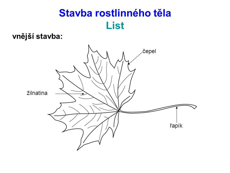 Stavba rostlinného těla List vnější stavba: řapík čepel žilnatina