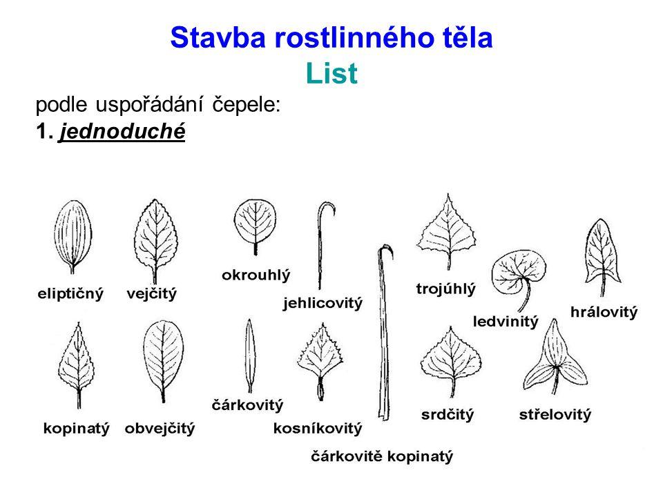 Stavba rostlinného těla List podle uspořádání čepele: 1. jednoduché