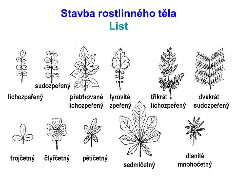 Stavba rostlinného těla List