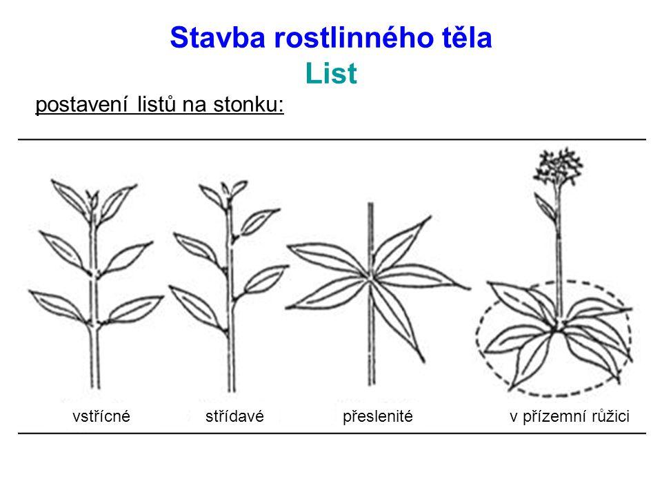 postavení listů na stonku: vstřícnéstřídavépřeslenitév přízemní růžici