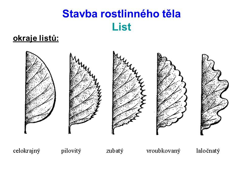 Stavba rostlinného těla List listy bez řapíku přisedlé objímavé