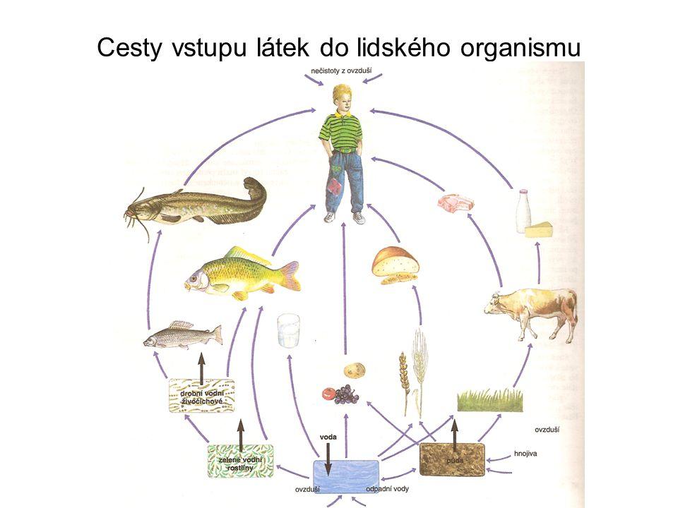 Cesty vstupu látek do lidského organismu