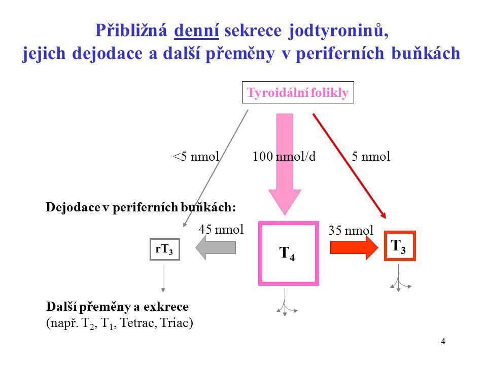 4 Přibližná denní sekrece jodtyroninů, jejich dejodace a další přeměny v periferních buňkách Tyroidální folikly T 4 T3T3 rT 3 <5 nmol 100 nmol/d 5 nmol Dejodace v periferních buňkách: Další přeměny a exkrece (např.