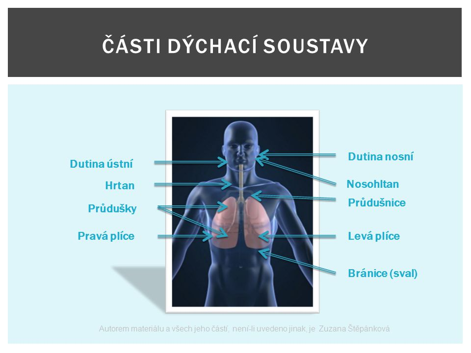 1.Co nám umožňuje dýchání. dýchací soustava 2. Co člověk vdechuje.