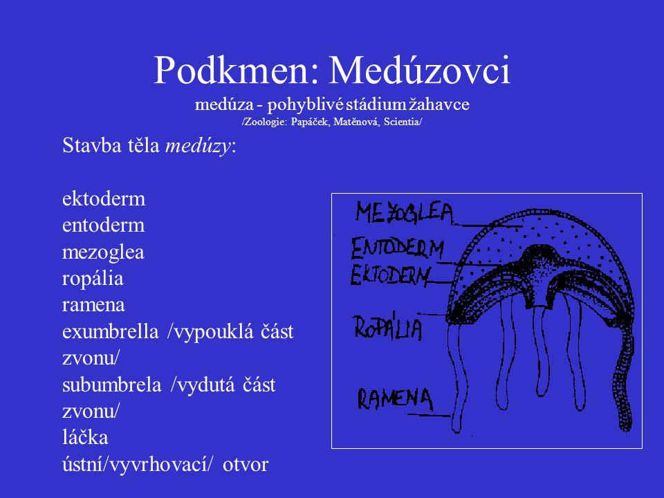 Medúzovci - gonochoristé proces metageneze /střídání pohl.