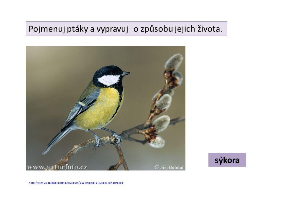 Pojmenuj ptáky a vypravuj o způsobu jejich života.