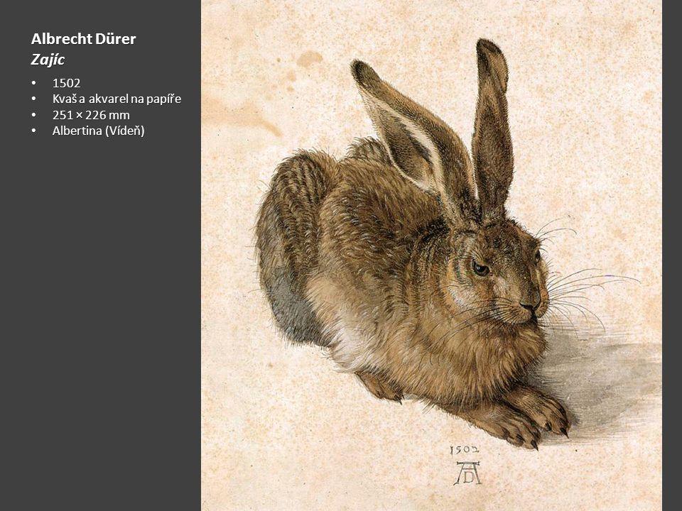 Albrecht Dürer Zajíc 1502 1502 Kvaš a akvarel na papíře Kvaš a akvarel na papíře 251 × 226 mm 251 × 226 mm Albertina (Vídeň) Albertina (Vídeň)
