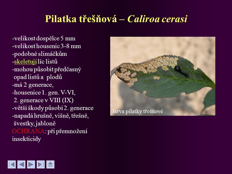Pilatka třešňová – Caliroa cerasi -velikost dospělce 5 mm -velikost housenic 3-8 mm -podobné slimáčkům -skeletují líc listůskeletují -mohou působit př