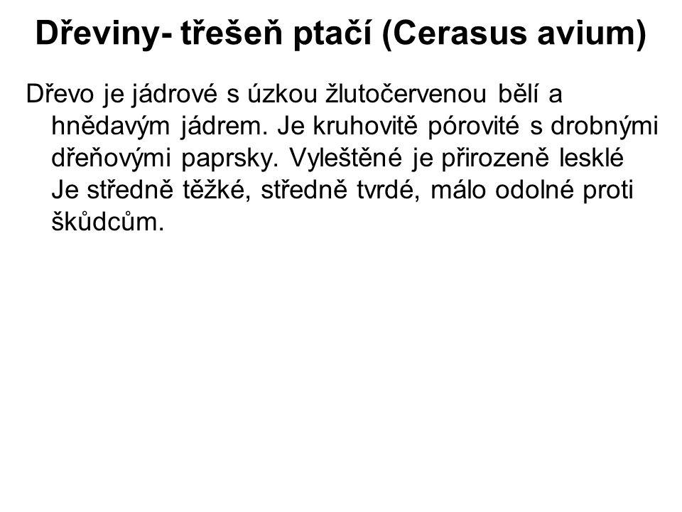 Dřeviny- třešeň ptačí (Cerasus avium) Dřevo je jádrové s úzkou žlutočervenou bělí a hnědavým jádrem. Je kruhovitě pórovité s drobnými dřeňovými paprsk