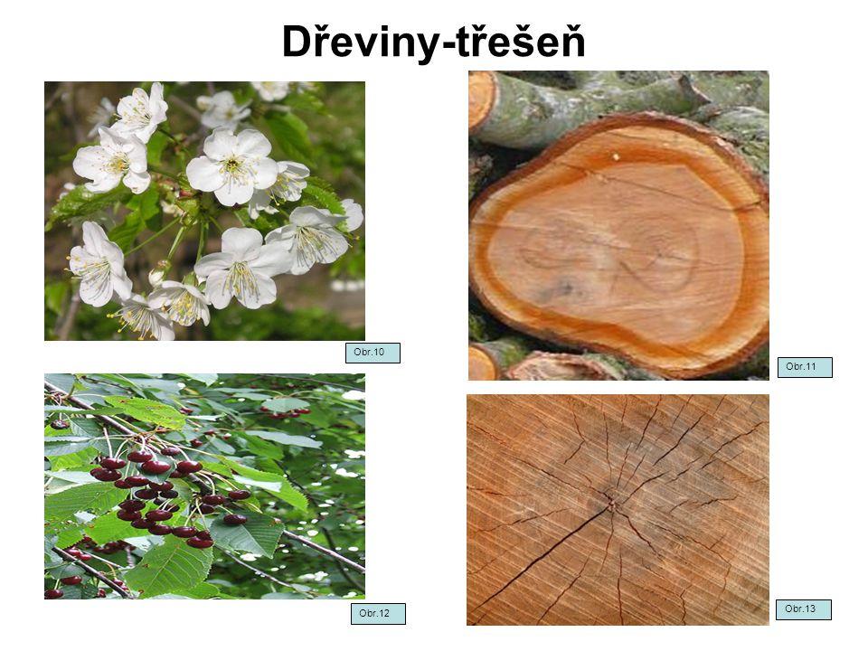 Dřeviny-třešeň Obr.12 Obr.13 Obr.10 Obr.11