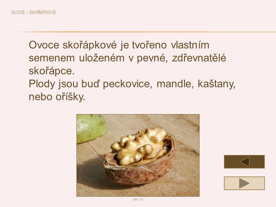 Ovoce skořápkové je tvořeno vlastním semenem uloženém v pevné, zdřevnatělé skořápce. Plody jsou buď peckovice, mandle, kaštany, nebo oříšky. obr. 13