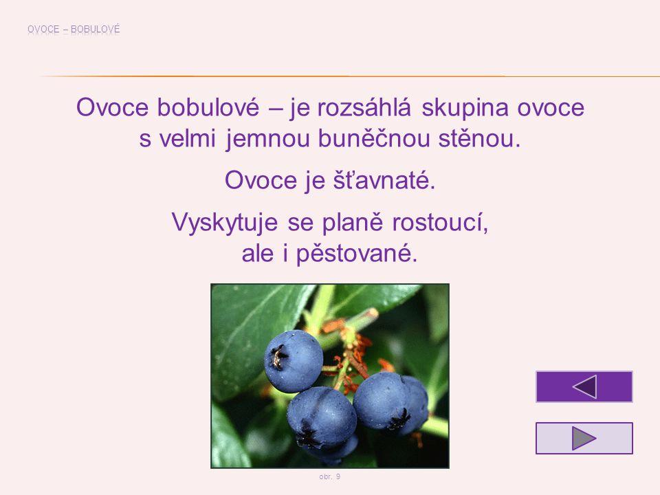 Ovoce bobulové – je rozsáhlá skupina ovoce s velmi jemnou buněčnou stěnou. Ovoce je šťavnaté. Vyskytuje se planě rostoucí, ale i pěstované. obr. 9