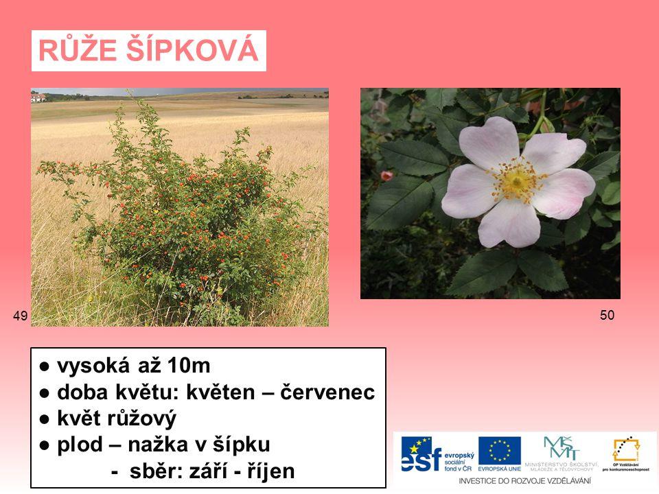 RŮŽE ŠÍPKOVÁ ● vysoká až 10m ● doba květu: květen – červenec ● květ růžový ● plod – nažka v šípku - sběr: září - říjen 50 49
