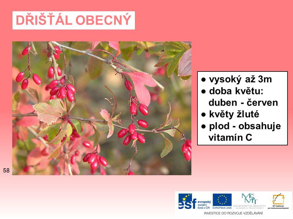 DŘIŠŤÁL OBECNÝ ● vysoký až 3m ● doba květu: duben - červen ● květy žluté ● plod - obsahuje vitamín C 58