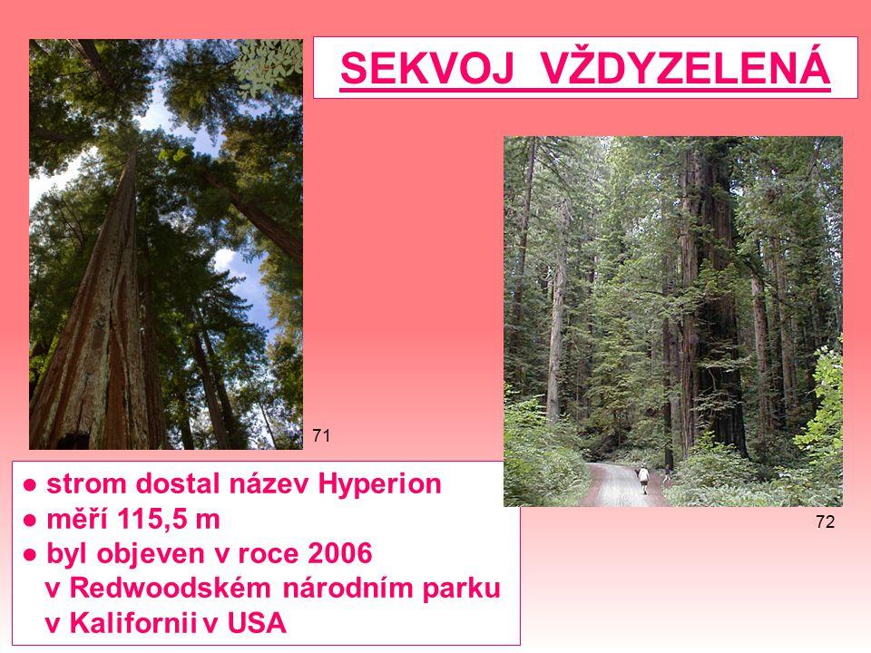 ● strom dostal název Hyperion ● měří 115,5 m ● byl objeven v roce 2006 v Redwoodském národním parku v Kalifornii v USA SEKVOJ VŽDYZELENÁ 72 71