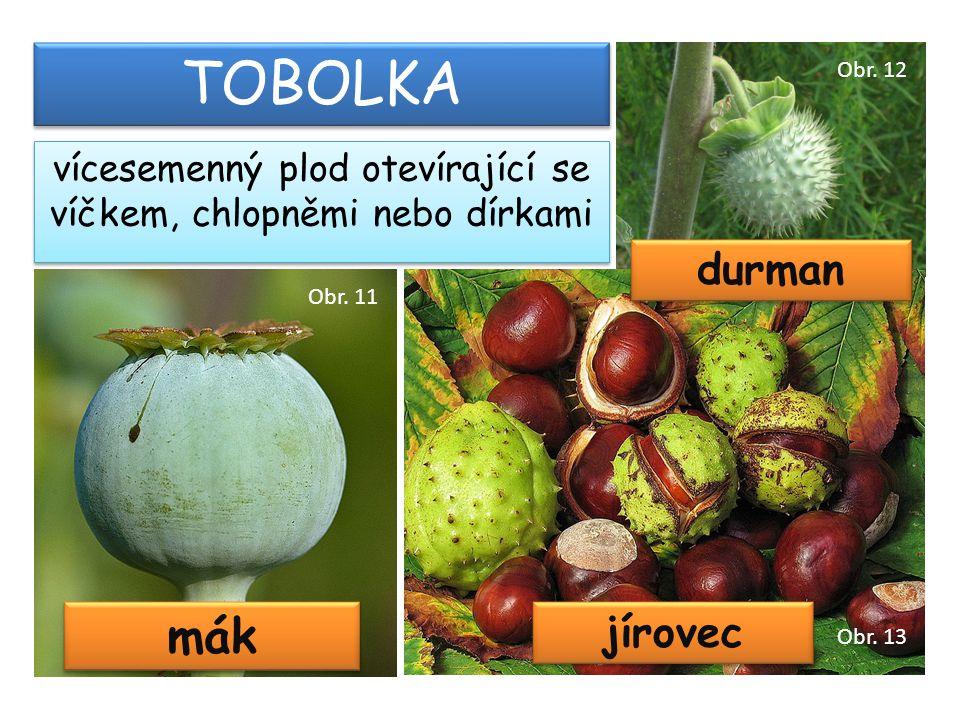 mák TOBOLKA vícesemenný plod otevírající se víčkem, chlopněmi nebo dírkami jírovec durman Obr. 11 Obr. 12 Obr. 13