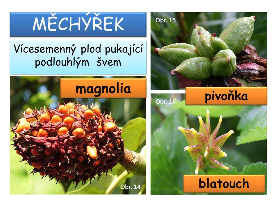 magnolia MĚCHÝŘEK Vícesemenný plod pukající podlouhlým švem pivoňka blatouch Obr. 14 Obr. 15 Obr. 16