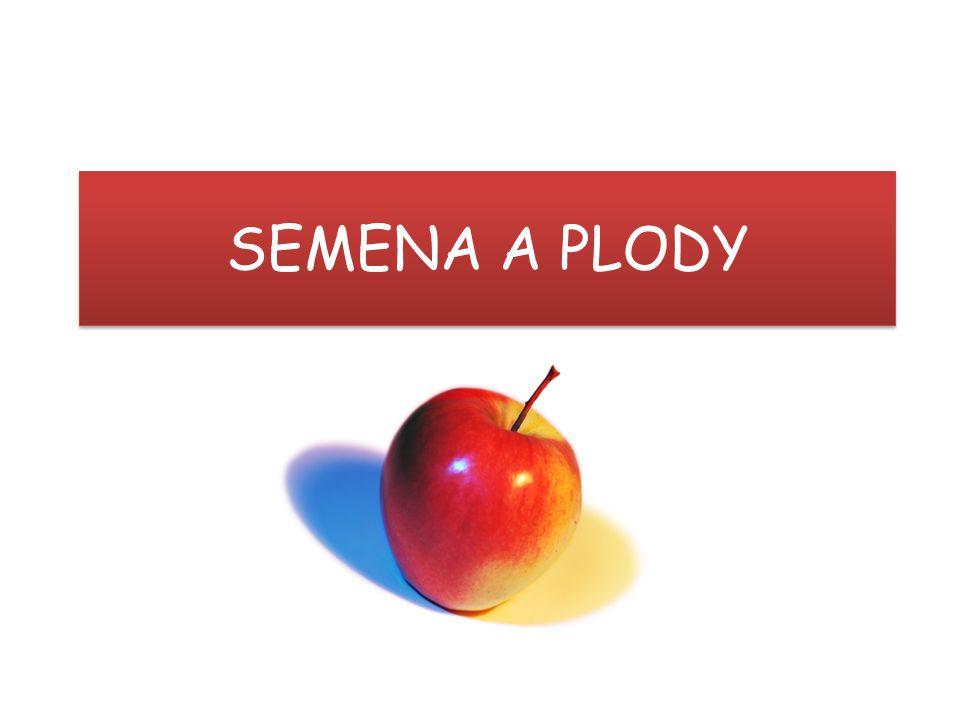 SEMENA A PLODY