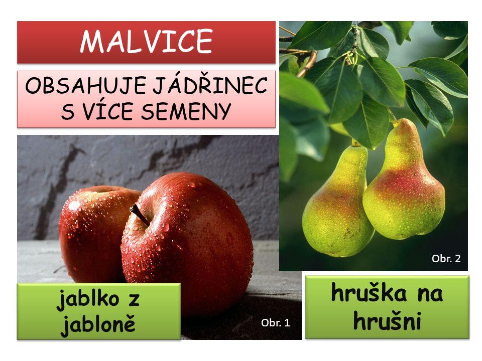 jablko z jabloně hruška na hrušni MALVICE OBSAHUJE JÁDŘINEC S VÍCE SEMENY OBSAHUJE JÁDŘINEC S VÍCE SEMENY Obr. 1 Obr. 2