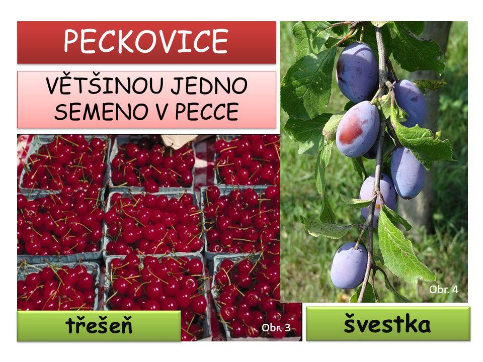 třešeň švestka PECKOVICE VĚTŠINOU JEDNO SEMENO V PECCE Obr. 3 Obr. 4