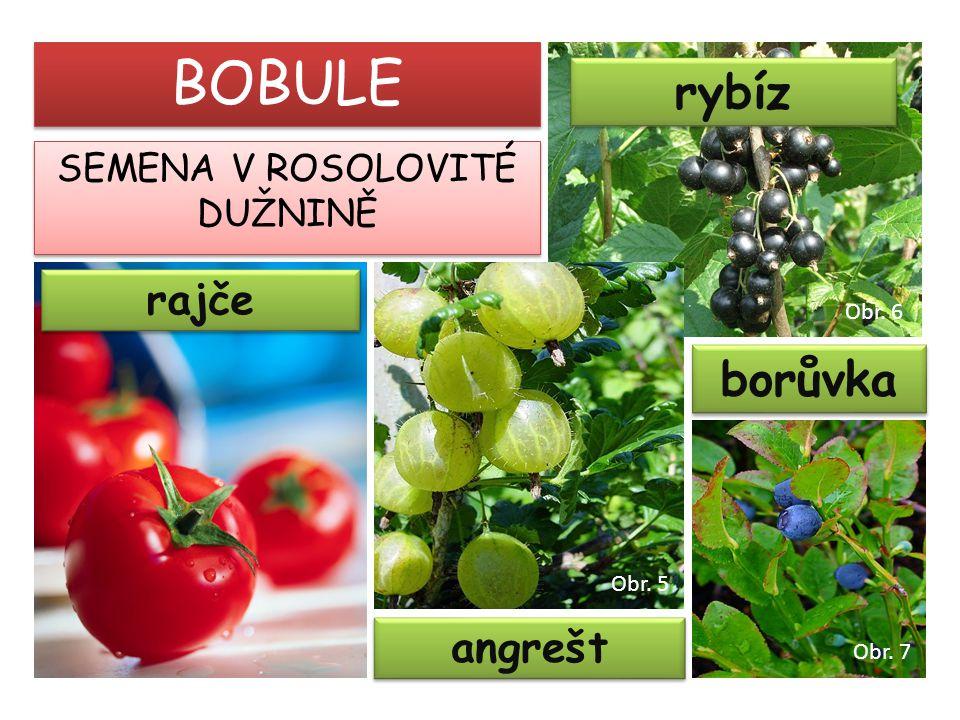 rajče rybíz BOBULE SEMENA V ROSOLOVITÉ DUŽNINĚ angrešt borůvka Obr. 5 Obr. 6 Obr. 7