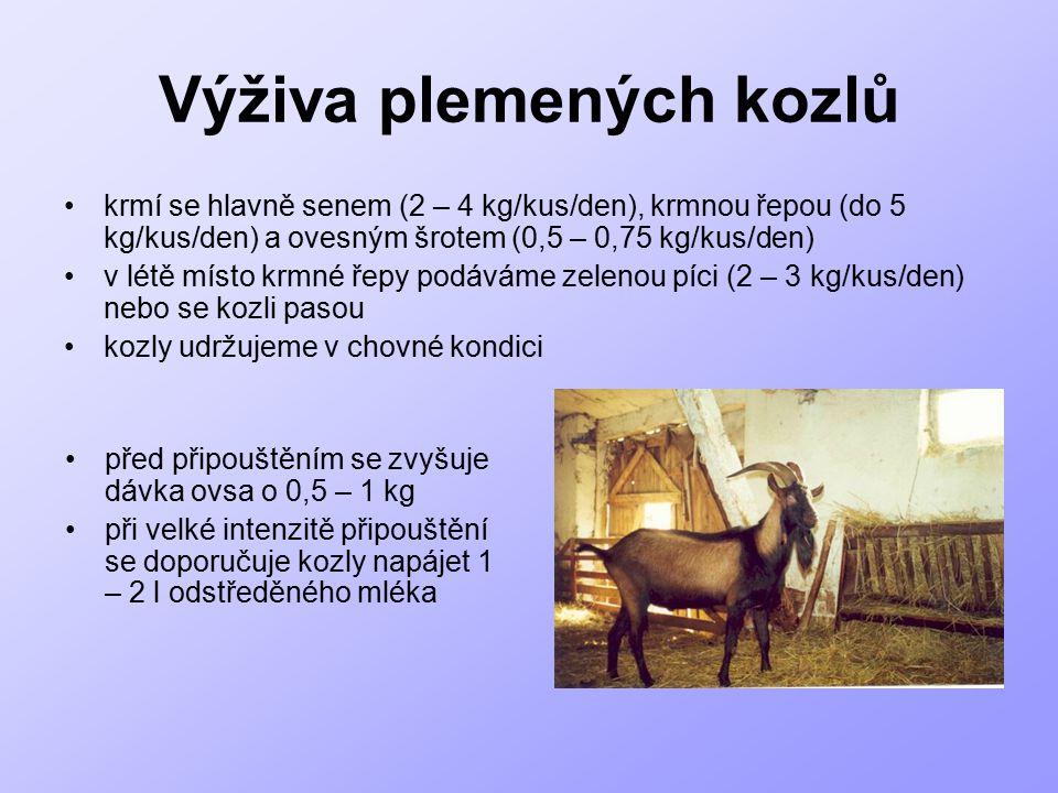 Výživa plemených kozlů krmí se hlavně senem (2 – 4 kg/kus/den), krmnou řepou (do 5 kg/kus/den) a ovesným šrotem (0,5 – 0,75 kg/kus/den) v létě místo k