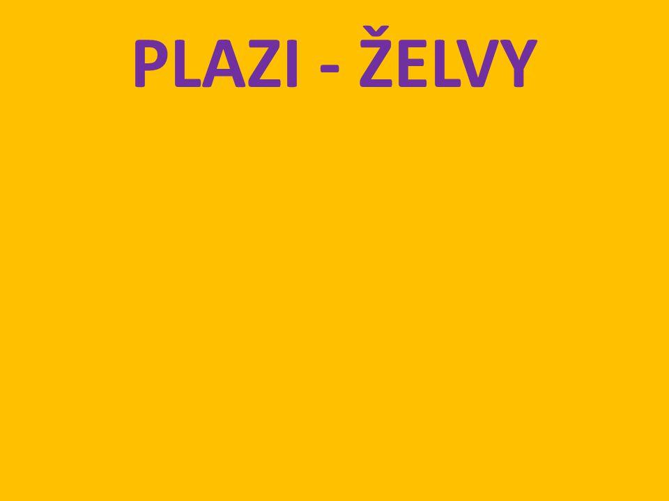 PLAZI - ŽELVY