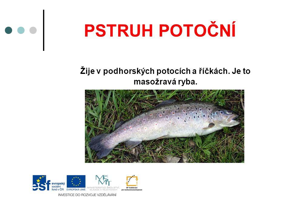PSTRUH POTOČNÍ Žije v podhorských potocích a říčkách. Je to masožravá ryba.
