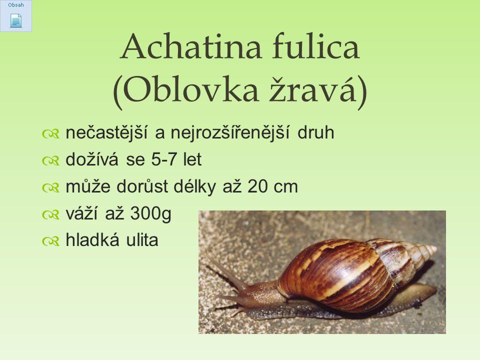  nečastější a nejrozšířenější druh  dožívá se 5-7 let  může dorůst délky až 20 cm  váží až 300g  hladká ulita Achatina fulica (Oblovka žravá)