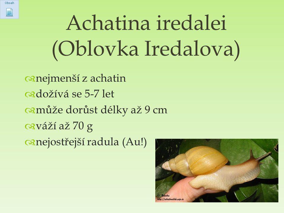  nejmenší z achatin  dožívá se 5-7 let  může dorůst délky až 9 cm  váží až 70 g  nejostřejší radula (Au!) Achatina iredalei (Oblovka Iredalova)