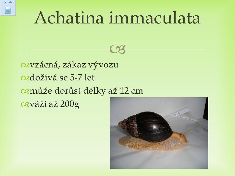   vzácná, zákaz vývozu  dožívá se 5-7 let  může dorůst délky až 12 cm  váží až 200g Achatina immaculata