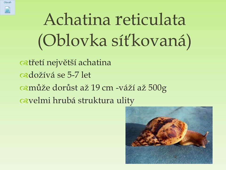  třetí největší achatina  dožívá se 5-7 let  může dorůst až 19 cm -váží až 500g  velmi hrubá struktura ulity Achatina r eticulata (Oblovka síťkova