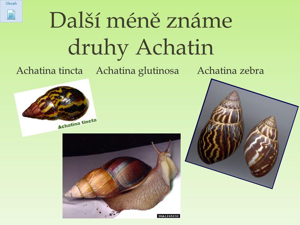 Achatina tincta Achatina glutinosa Achatina zebra Další méně známe druhy Achatin